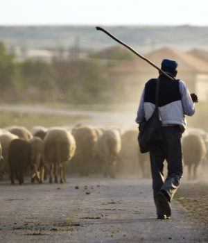 alphagamma are we sheep on autopilot part two entrepreneurship